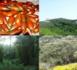 مليلية تتحسر على غابة جبل كوروكو و جمعيات بيئية تعرض مساعدتها من أجل استعادة هذا الجبل لعافيته