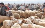 وزارة الفلاحة: سعر أضحية العيد هذه السنة سيتراوح بين 2200 و 2300 درهم للرأس