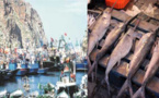 """حادثة """"محسن فكري"""" تعيد """"سمك أبو سيف"""" للبيع داخل أسواق المكتب الوطني للصيد بميناء الحسيمة"""