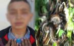 """انتشار حشرة """"دودة الصندل"""" بات يهدد تلاميذ وساكنة إساكن بإقليم الحسيمة"""