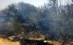 إندلاع حريق وسط أشجار الزيون بسلوان