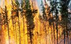 عشرة آلاف شخص و300 آلية لمواجهة الحرائق