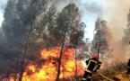 ضمنها حريق كبدانة بالناظور.. أكثر من 125 حريقاً غابوياً عرفه المغرب منذ بداية السنة الجارية