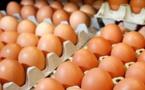 نصائح الخبراء للتأكد من صلاحية البيض