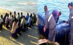 الدريوش.. توقيف 47 مهاجر سري بشاطئ تزاغين وحجز قارب مطاطي وسيارة رباعية الدفع