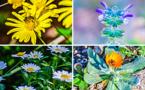 مع حلول الربيع.. شاهدوا جمالية النباتات التي تحيط ببحيرة مارتشيكا
