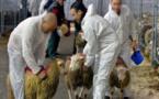 وزيرة تدعو مسلمي بلجيكا إلى تقديم تبرعات للمحرومين بمناسبة عيد الأضحى بدل ذبح خروف