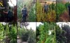 الحرس المدني الإسباني يكتشف 12 مزرعة لغرس الحشيش ويحجز 220 كيلوغراما من سنابل الكيف