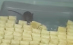 فأر يأكل حلوى البقلاوة في مخبزة