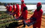 إسبانيا تتعهد باتخاذ إجراءات عاجلة لتحسين ظروف عمل المغربيات في حقولها وتطلق عملية جديدة للتشغيل