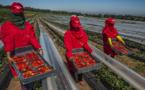وزارة الشغل تفرض معايير جديدة لانتقاء عاملات الفراولة بإسبانيا