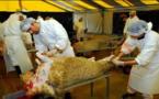 منع الذبح الحلال للمواشي يغضب مسلمي ويهود بلجيكا