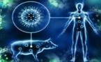 هام للمغاربة...هذه أعراض وباء أنفلونزا الخنازير القاتل.. وهذه طرق الوقاية من الفيروس