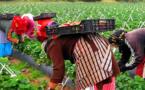 يتيم: اسبانيا بلد للحقوق والحريات وتلقينا منها ضمانات بشأن حقوق عاملات الفراولة