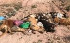 """صور.. رمي جثث كلاب مقتولة بعد شن حملة إبادة جماعية وسط """"رأس الماء"""" يثير غضب الساكنة"""