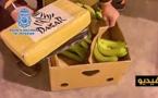 شاهدوا بالفيديو.. إكتشاف شحنة من مخدر الكوكايين مخبأة داخل صناديق الموز