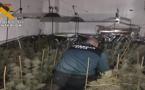 بالصور.. تفكيك سبع مزارع لإنتاج الماريغوانا واعتقال 10 أشخاص ضواحي قرطبة
