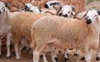 """مع قرب عيد الأضحى.. """"أونسا"""" تعلن سيطرته على انتشار """"الحمى القلاعية"""" وتؤكد: صحة القطيع مستقرة"""