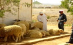 أمن بني بوعياش يسلم درك الدريوش 3 لصوص سرقوا أزيد من 30 خروفا من فلاح بتمسمان