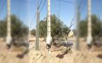 بالصور.. إنقطاعات في التيار الكهربائي بسبب إشتعال نيران في عدد من الأعمدة الكهربائية بالدريوش