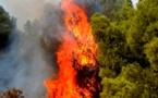 إطلاق سراح الراعيين المتهمان بإشعال حريق غابة إفرني والدرك الملكي يقترب من فك لغز الجريمة