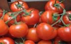 المغرب يصدر 426 ألف طن من الطماطم  الى الإتحاد الأوروبي خلال 7 أشهر