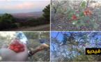 """شاهدوا بالفيديو.. رحلة البحث عن """"الساسنو"""" في غابة جبل القرن"""