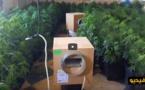 شاهدوا بالفيديو.. مداهمة مسكن يضم العشرات من نباتات الماريغوانا في ماربيا