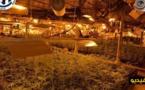 بالفيديو... العثور على مزرعة للقنب الهندي داخل منزل ضواحي مدينة ليل بشمال فرنسا