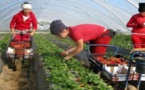 اليمين المتطرف الإسباني يعتزم منع العاملات الموسميات المغربيات من الالتحاق بحقول الفراولة