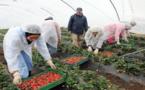 فتح باب الترشيح للقاطنات بالناظور والدريوش الراغبات في جني الفواكه الحمراء باسبانيا