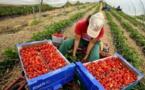 إجراءات إسبانية جديدة  لحفظ كرامة المغربيات داخل حقول الفراولة