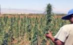"""تقنين زراعة """"الكيف""""ّ والعفو عن مزارعيه.. الحكومة ستبدي رأيها الاربعاء المقبل"""