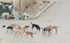 إنتشار الكلاب الضالة في شوارع إمزورن يصل الى البرلمان