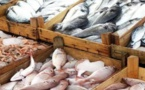السلطات الجمركية تسمح بعودة الأسماك المغربية الى الثغر المحتل