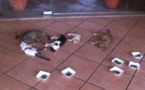 نفيسة شملال تكتب عن اعدام القطط بالمستشفى الحسني بالناظور