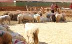 قرار اسباني يهدد مربي الماشية في الناظور بخسائر جسيمة