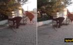 فيديو.. ضجّة في إيطاليا بسبب فيديو لمهاجر يشوي قطا في الشارع العام