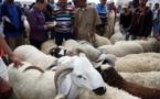 ترقيم أزيد من 7.2 مليون رأس من أضاحي العيد بينها 720 ألف بالجهة الشرقية