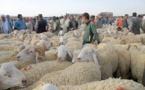 أخنوش يعلن فتح كل الأسواق بمناسبة عيد الأضحى ويشدّد على ضرورة احترام إجراءات الوقاية