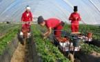 أزمة عاملات الفراولة المغربيات في طريقها للحل بتخصيص سفن خاصة ستبحر من ميناء هويلبا