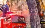 ألسنة النيران تلتهم هكتارا من غابة كوروكو والحريق متواصل