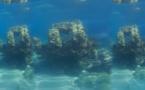 """الناظور.. اكتشاف بحريّ مُهم في سواحل """"أيت شيشار"""""""