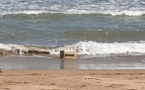 البحر يلفظ كميات مهمة من الحشيش بشاطئ السعيدية