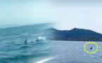 مثير.. ظهور أسماك قرش تسبح في سواحل مليلية