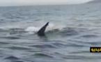 شاهدوا.. خبراء إسبان يحددون نوع القرش الذي ظهر في سواحل مليلية