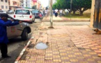 وزارة الداخلية تمنع على الجماعات قتل الكلاب الضالة في الشوارع