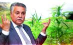 نبيل بن عبد الله: تقنين القنب الهندي سيستفيد منه البسطاء وهي خطوة جريئة من الدولة