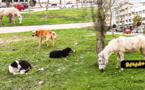 انتشار الكلاب الضالة بالناظور يغضب المواطنين وسط مطالب باحتواء الوضع