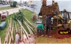 عمالة الناظور و شركة العمران تشرعان في عملية تشجير شارع طنجة وسط الناظور